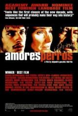 Amores_Perros-783064945-main